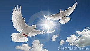 deux-colombes-volantes-8877995